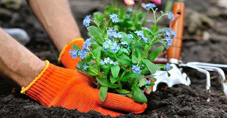 landscaper planting flowers