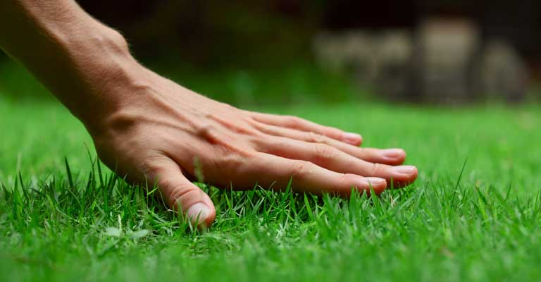 proper lawn care gardener