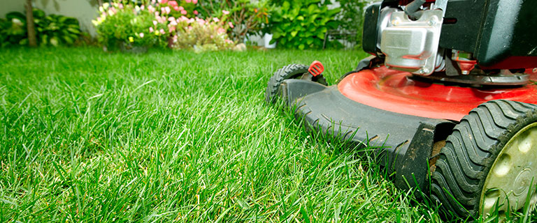 Lawnmower cutting grass garden care [lawn mowing]