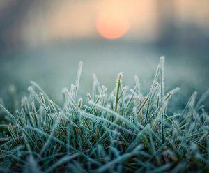 Ground frost lawn frozen