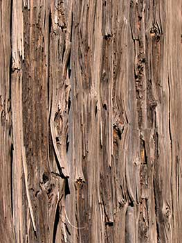 Rotting wooden boards