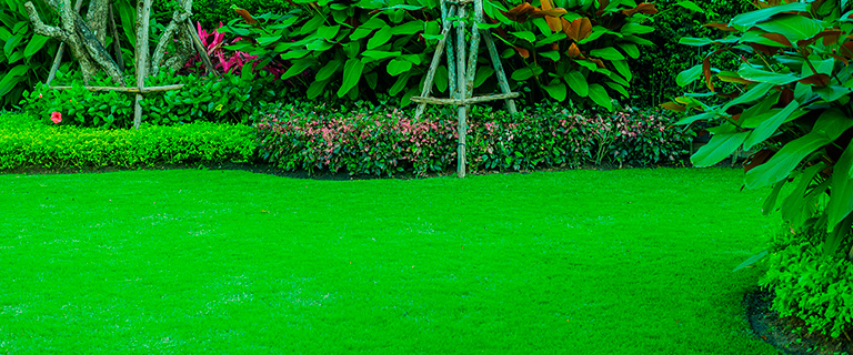 Best Warm-Season Grasses for your Lawns in Texas Part I