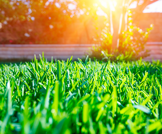 Beautiful view of a grass lawn in sunlight.