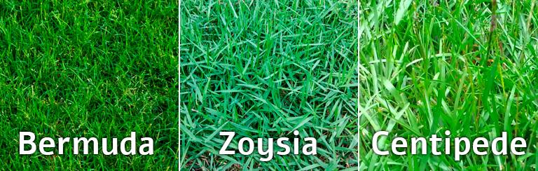 Types of Grass: Centipede, Bermuda, Zoysia