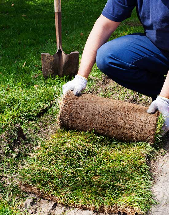 Sod installation and landscaping